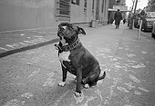 DOG 07 MQ0030 01