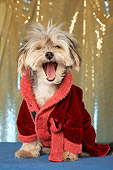 DOG 07 MQ0103 01