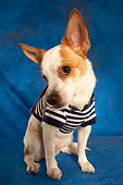 DOG 07 MQ0106 01