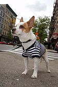 DOG 07 MQ0107 01