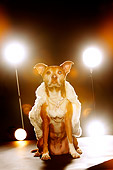 DOG 07 MQ0109 01