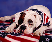 DOG 07 RK0081 06