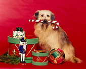 DOG 07 RK0098 05