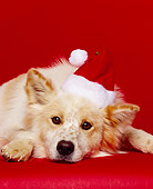 DOG 07 RK0116 07