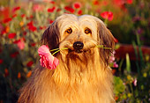 DOG 07 RK0125 02