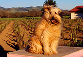 DOG 07 RK0138 02