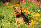 DOG 07 RK0144 01