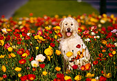 DOG 07 RK0147 02