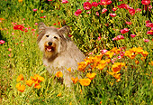 DOG 07 RK0149 15