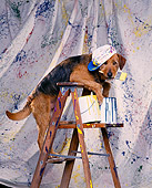 DOG 07 RK0186 01
