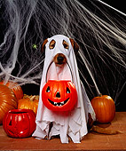 DOG 07 RK0253 09
