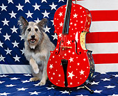 DOG 07 RK0296 02