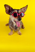 DOG 07 RK0453 04