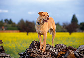 DOG 07 RK0470 01