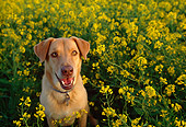 DOG 07 RK0471 05