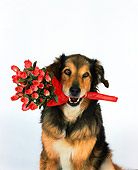 DOG 07 RK0478 03