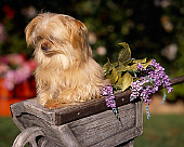 DOG 07 RK0531 05