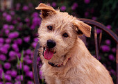 DOG 07 RK0540 05