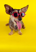 DOG 07 RK0570 01