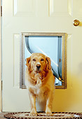 DOG 07 RS0020 01