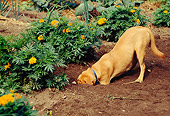 DOG 07 RS0025 01