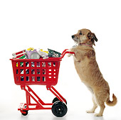 DOG 07 RS0046 02
