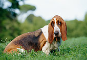 DOG 08 CB0006 01