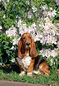 DOG 08 CE0006 01