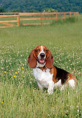 DOG 08 CE0008 01