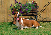 DOG 08 CE0009 01