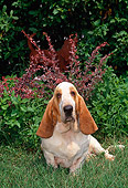 DOG 08 CE0010 01