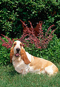 DOG 08 CE0011 01