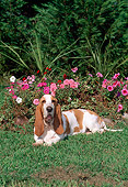 DOG 08 CE0012 01