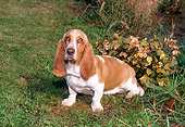 DOG 08 FA0002 01