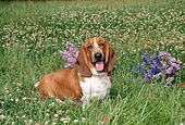 DOG 08 FA0003 01