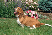 DOG 08 FA0004 01