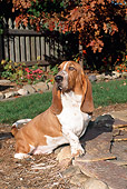 DOG 08 FA0006 01