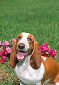 DOG 08 FA0007 01