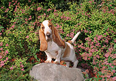 DOG 08 FA0008 01