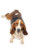 DOG 08 JE0015 01