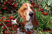 DOG 08 LS0005 01