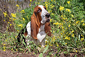 DOG 08 LS0006 01