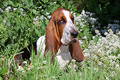 DOG 08 LS0007 01