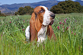 DOG 08 LS0008 01