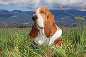 DOG 08 LS0010 01