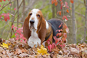 DOG 08 LS0021 01