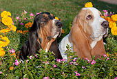 DOG 08 LS0024 01