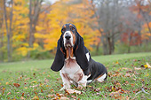 DOG 08 LS0026 01