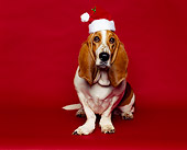DOG 08 RK0016 02