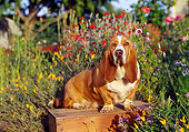 DOG 08 RK0023 01